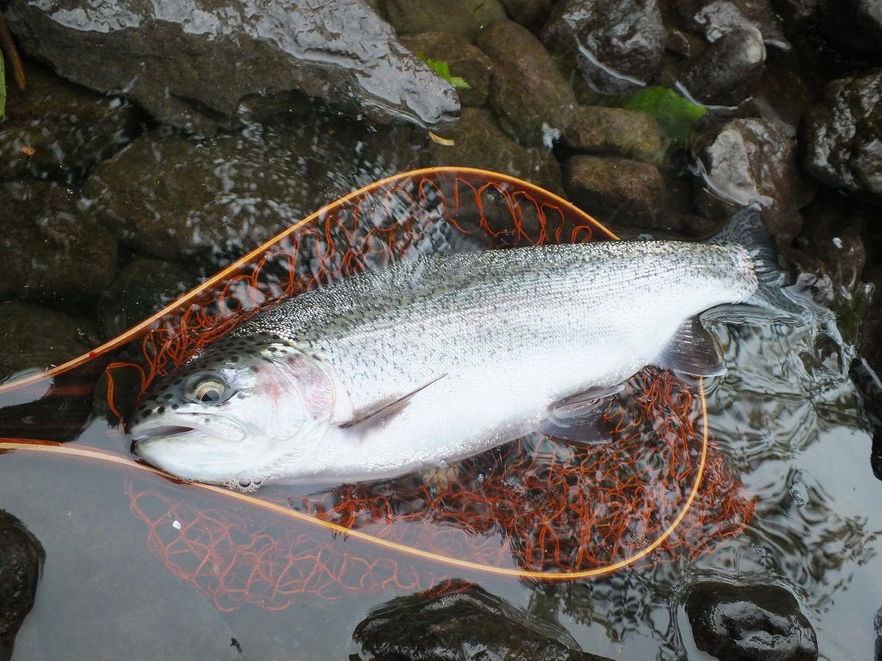 魚 (6)