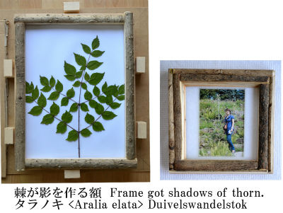 Frame Duivelswandelstok 01_edited-1