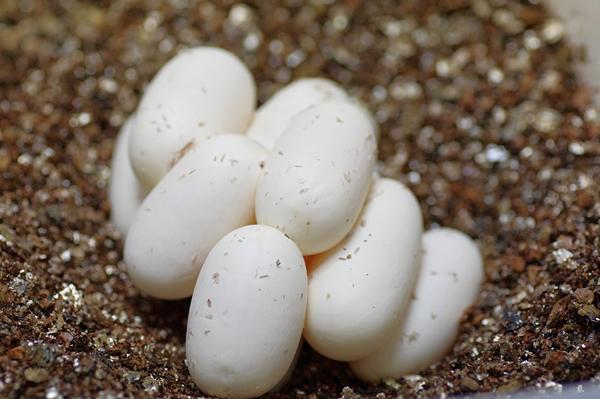 150608産卵