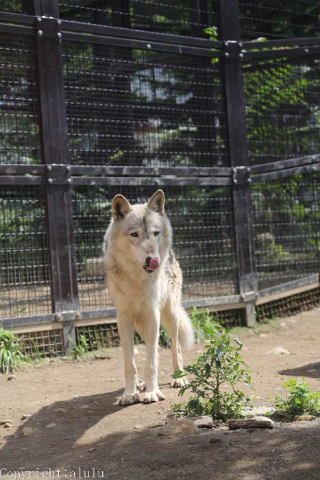 円山動物園 動物写真