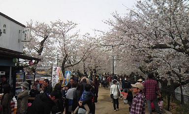 臥竜公園桜の回廊