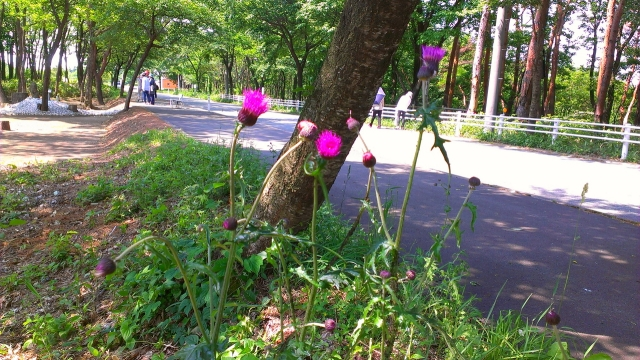 2015-05-29_09-40-54.jpg