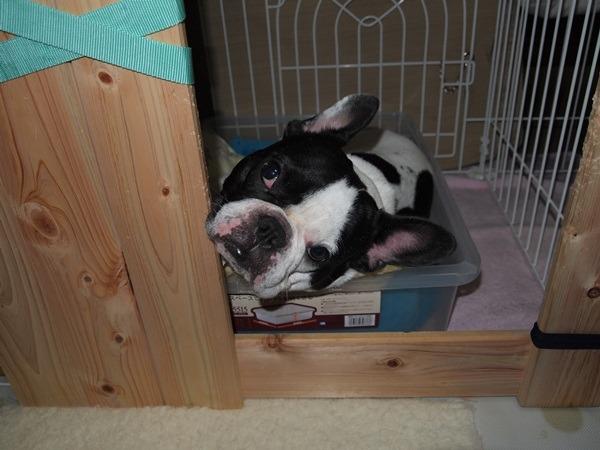 その後のベッド