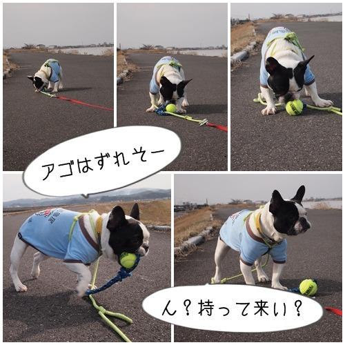 ボール遊び(大左エ門編)