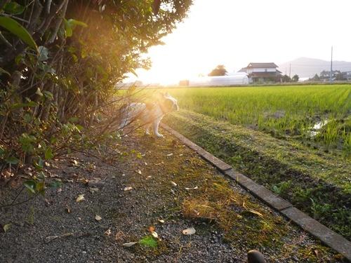 秋の夕暮れ黄金色の巻き