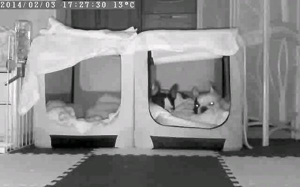 留守番カメラ