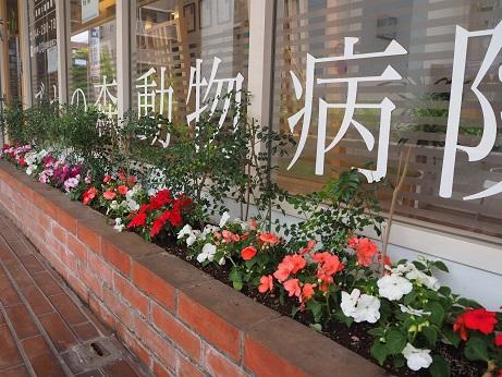 20150525 花壇①