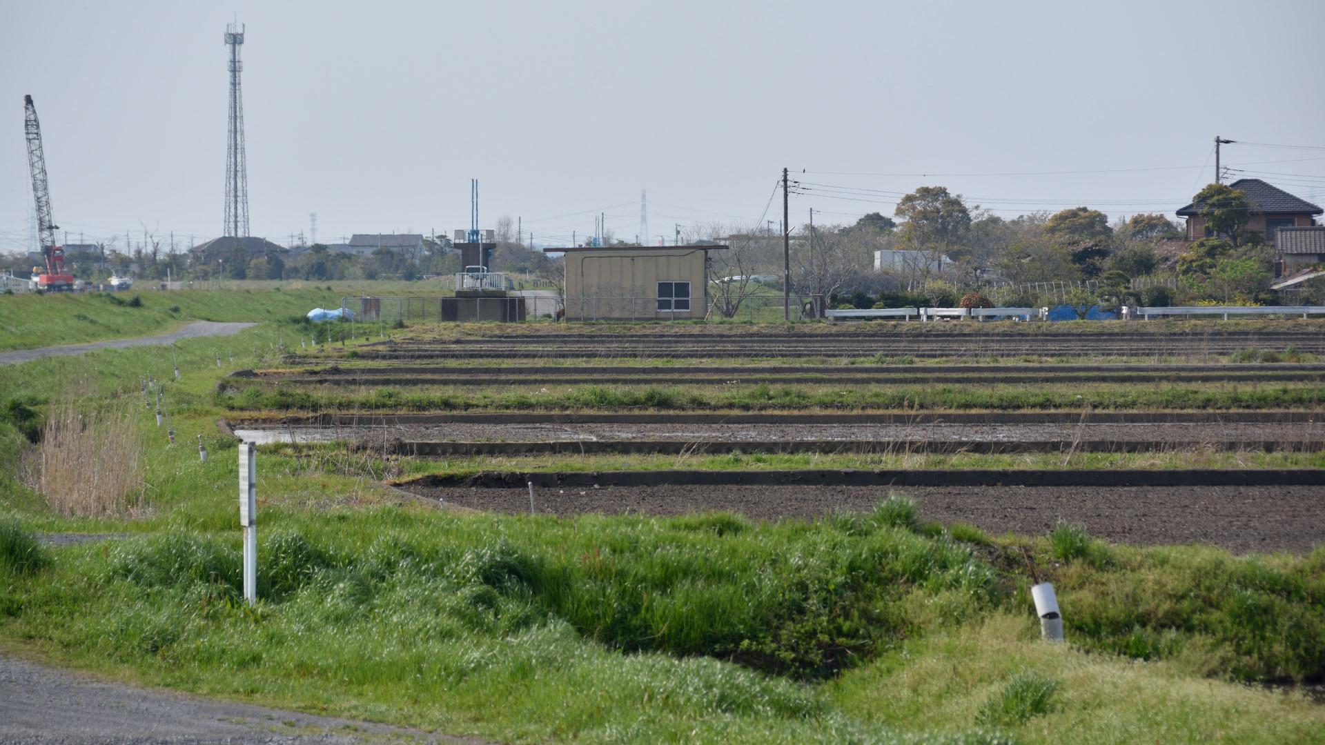 もうすぐ田植えだ、常陸川沿いの水田
