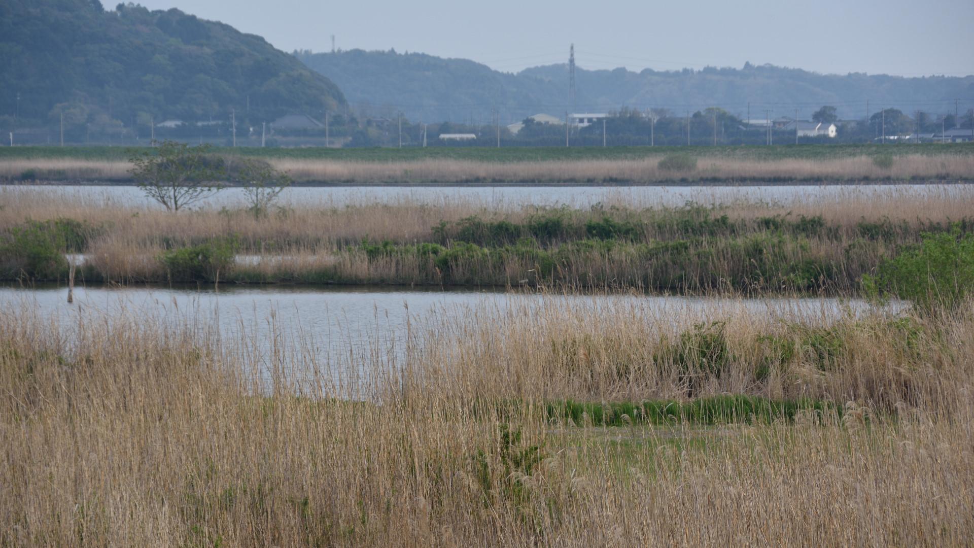 利根川中洲、ここが漁場?
