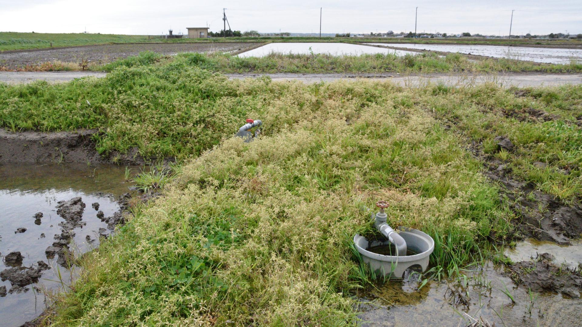 田圃の水張はこの蛇口からだ!