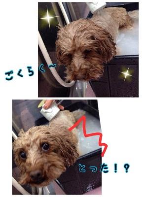 13_20150510205403c6b.jpg