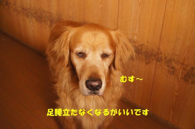 DSC04615.jpg