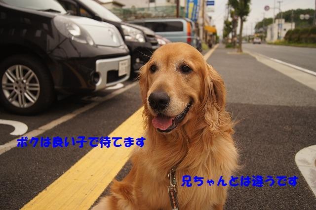 DSC04883.jpg