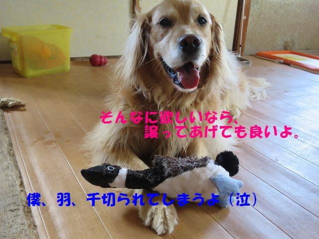 IMG_3806.jpg
