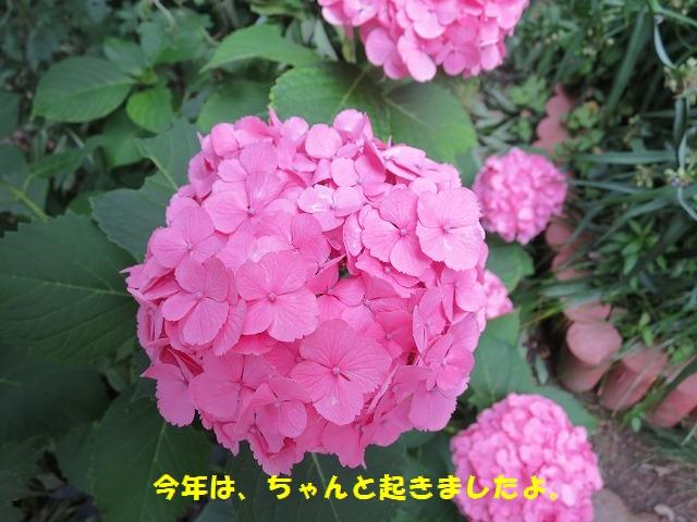 IMG_4278.jpg