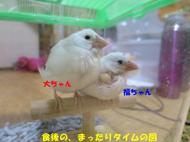 IMG_4337_2.jpg
