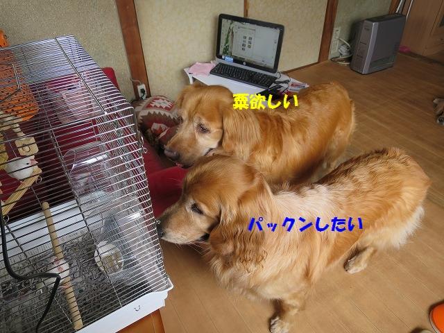IMG_4365.jpg