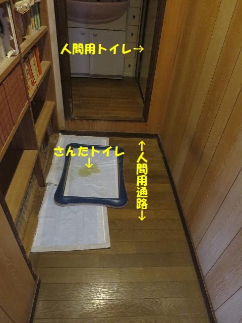 IMG_4392.jpg