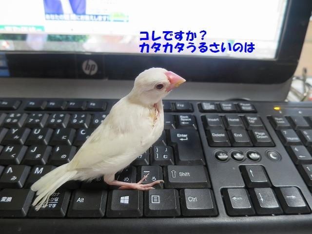 IMG_4524.jpg