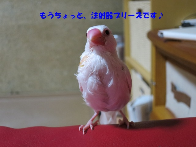 IMG_4582.jpg