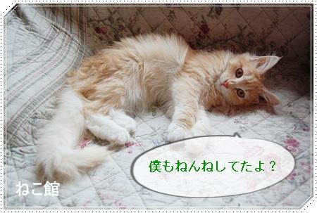 blog3_20150223141234bb8.jpg