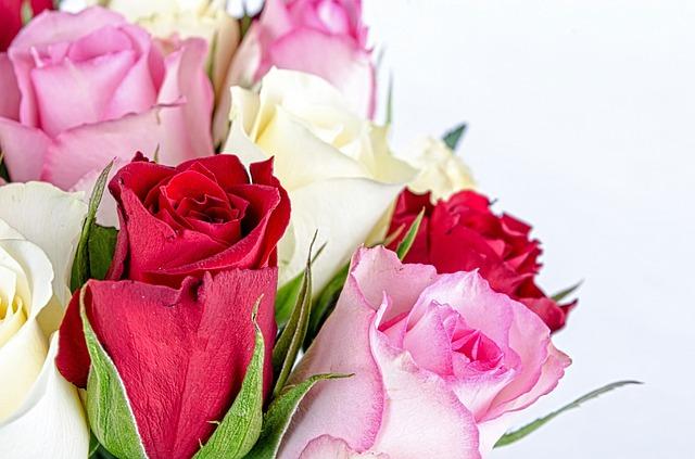 flower-316621_640.jpg