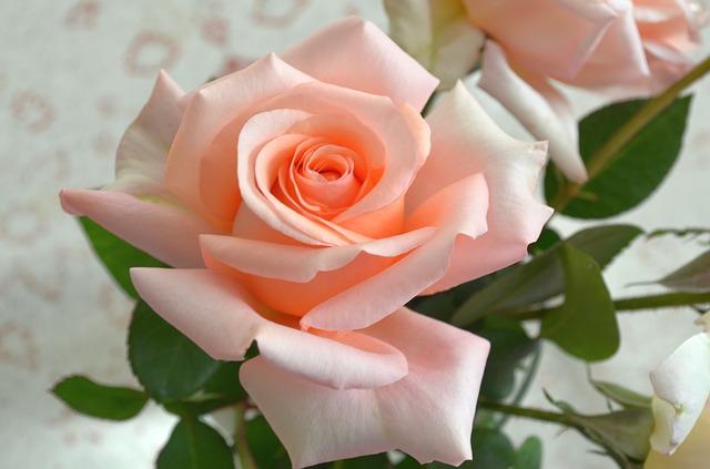 rose-482721_640.jpg