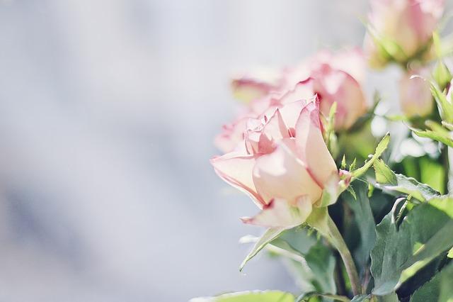 roses-604081_640.jpg