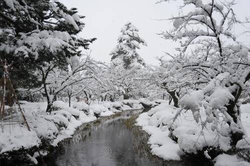 正月の兼六園2015_09