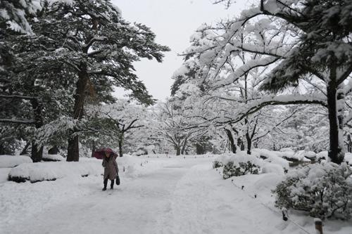 正月の兼六園2015_10