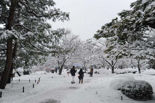 正月の兼六園2015_11