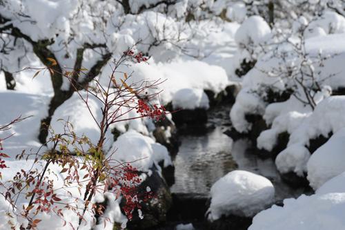 正月の兼六園2015_15