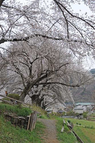 長瀞・秩父2015春_22