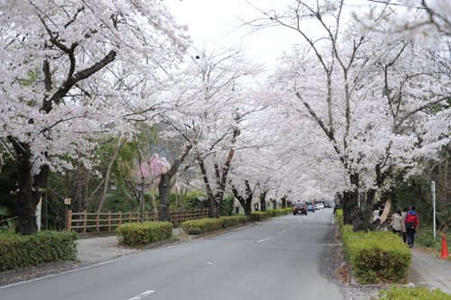 長瀞・秩父2015春_25