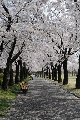 開成山公園05