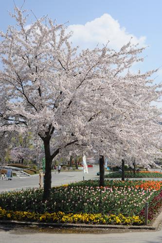 開成山公園06