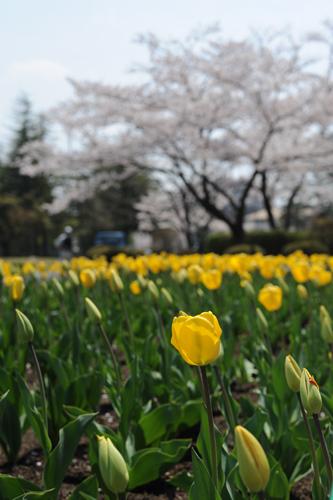 開成山公園07