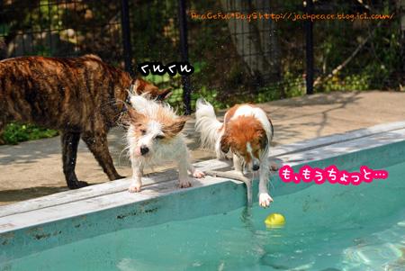 150612_pool3.jpg
