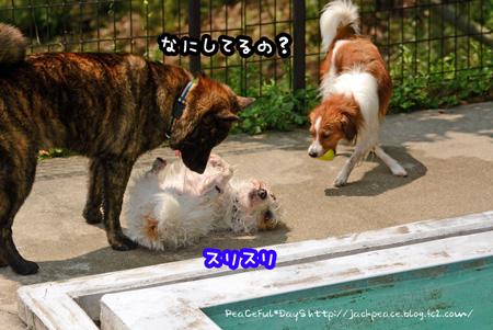 150612_pool7.jpg