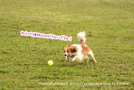 150617_kinokawa3.jpg