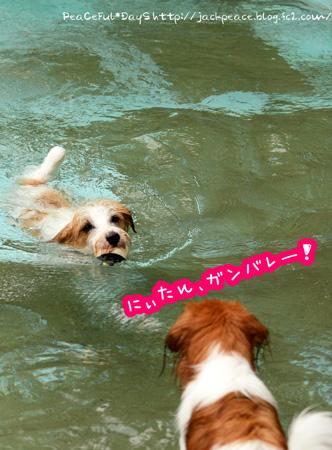 150622_pool.jpg