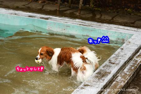 150622_pool1.jpg