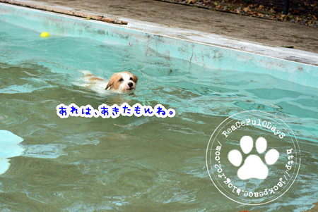 150622_pool4.jpg