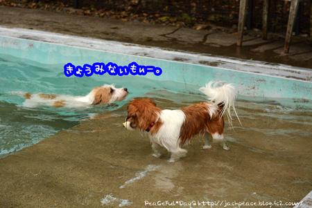 150622_pool5.jpg
