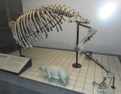 ⑫恐竜の骨