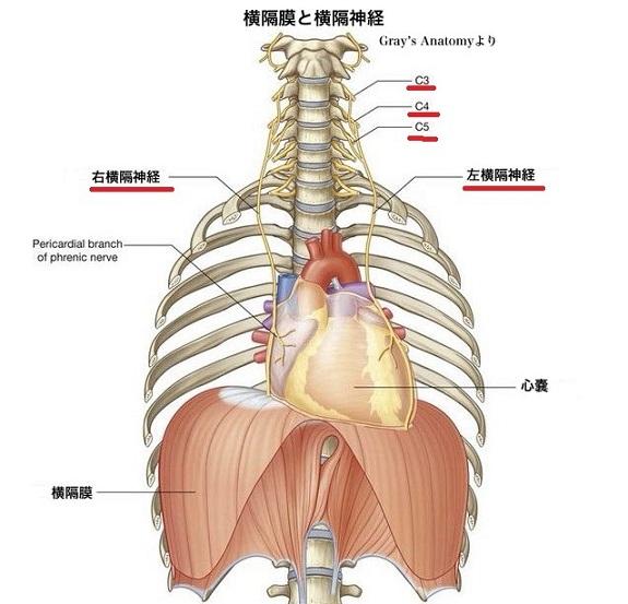 横隔膜と内臓の関係 1 - 光透波と体のスピリチュアル