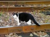 琴電琴平駅にいた猫