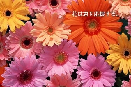 花は君を応援する 前里光秀