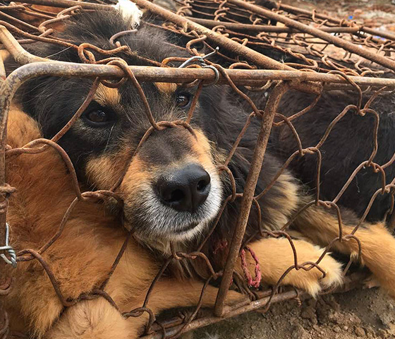 form-inset-dogmeat-yulin-cage.jpg