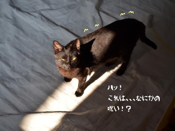 aDSC_9118.jpg